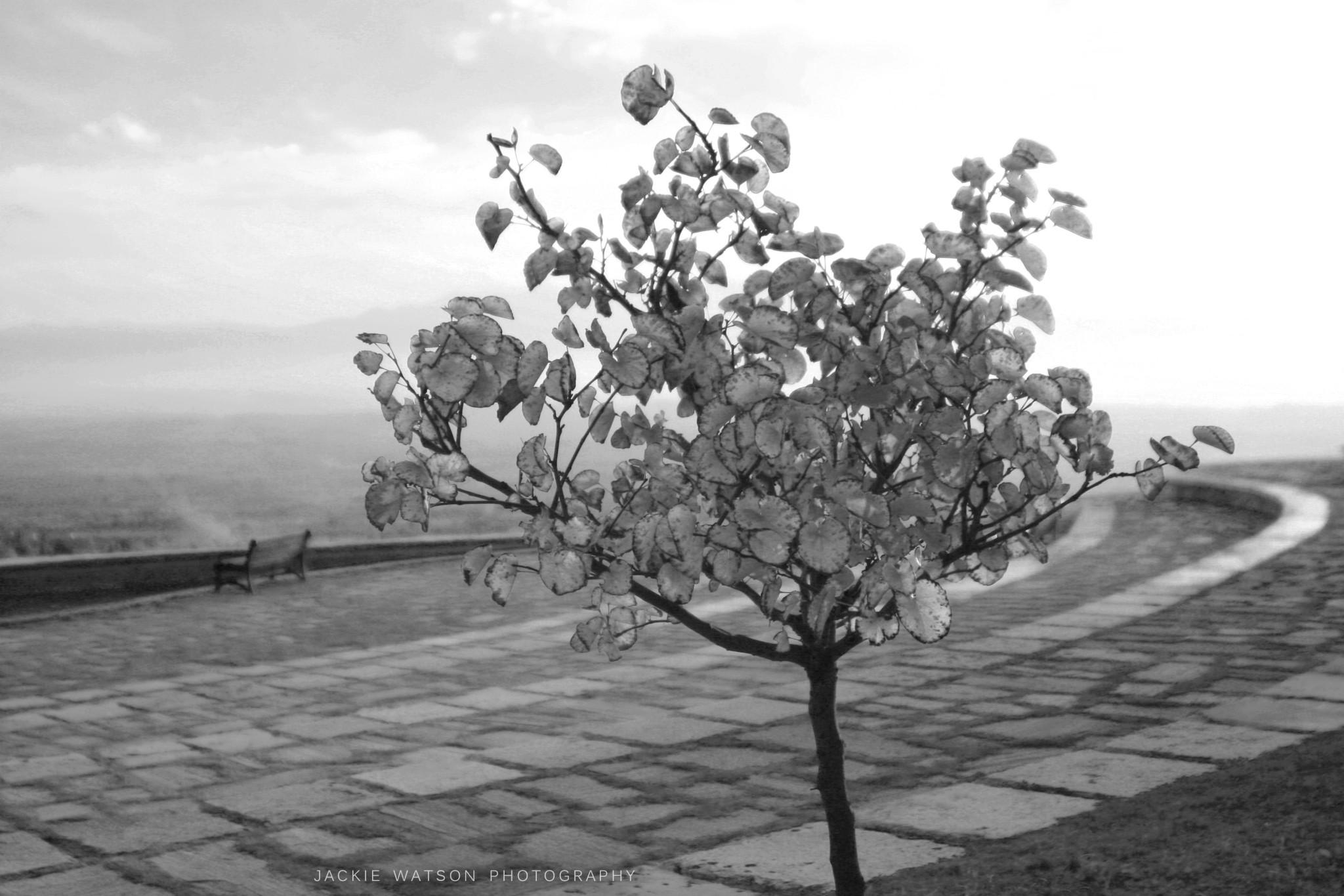 Turkey Destination Wedding & Travel Photographer